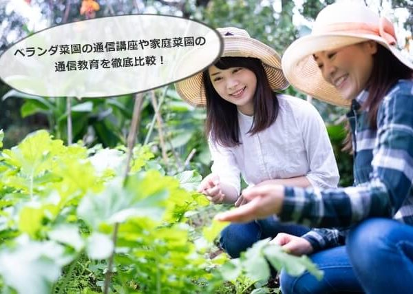 ベランダ菜園の通信講座や家庭菜園の通信教育を徹底比較!口コミ評判も!
