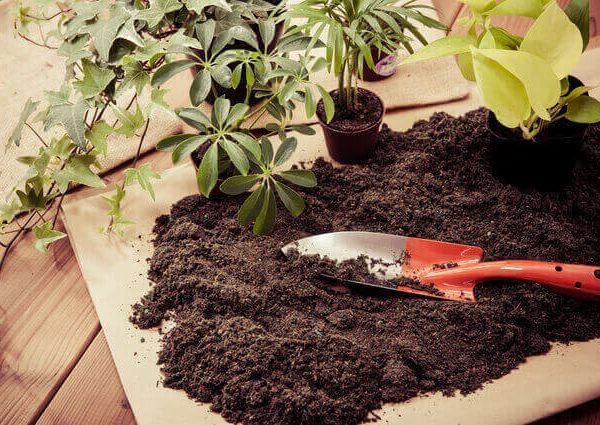 植物のストレスを最小限にする、正しい野菜苗の植え付け方法