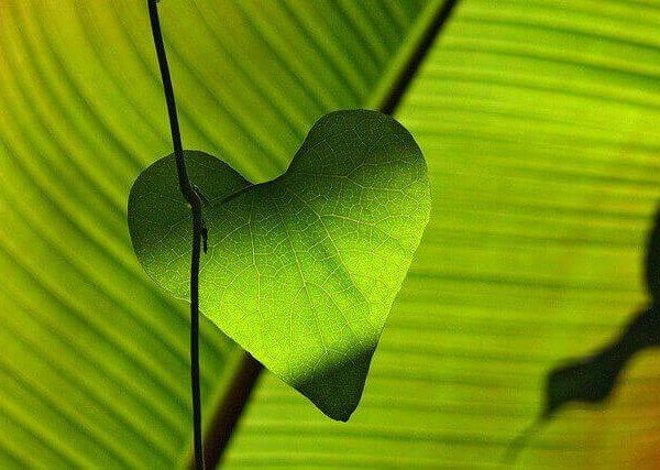 寒い地域でも手軽に育てやすい、寒さに強い観葉植物4選