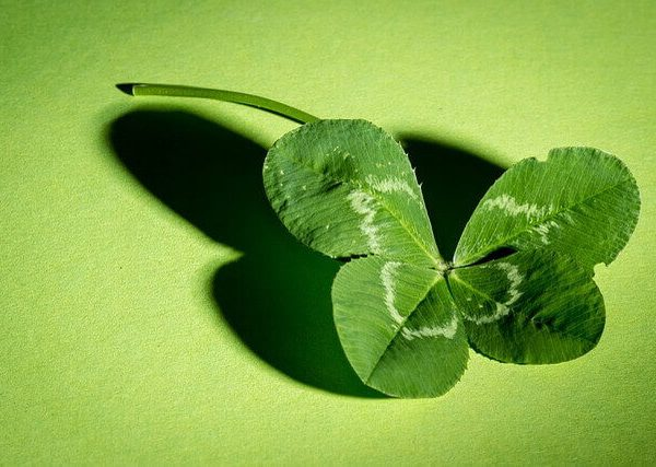ラベンダーやレモンの育て方【種から鉢での栽培方法】
