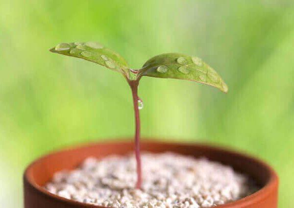 ベランダ菜園での肥料と栄養剤
