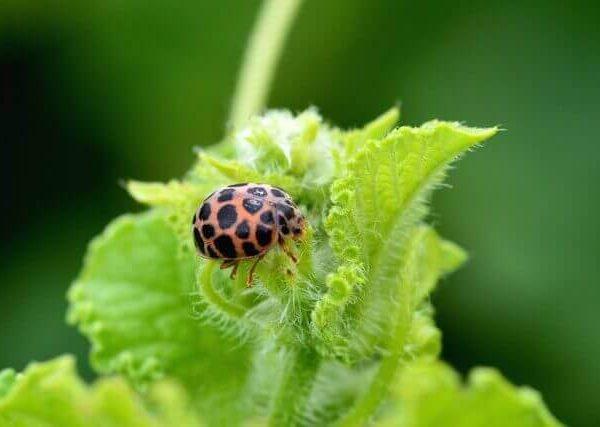 虫食いのサインを見逃すな!野菜に発生する害虫とは?