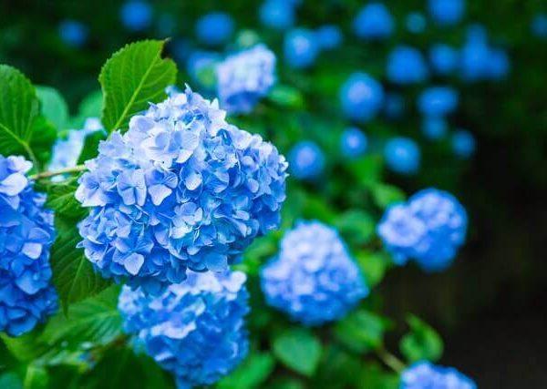 にほんブログ村で人気のベランダ菜園ブログ5選