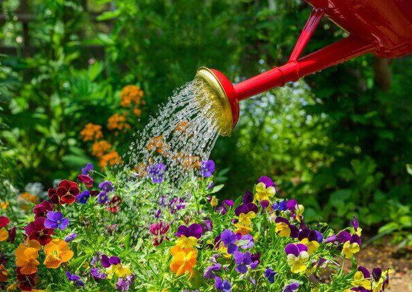 キャットニップの育て方【室内やプランターで種から栽培】
