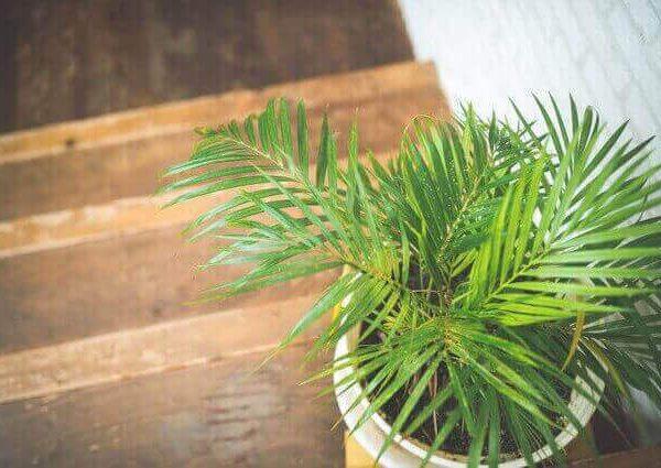 タイムの育て方【室内やプランターで種から栽培】