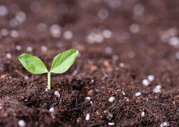 自分で作れる簡単生ゴミ堆肥の作り方