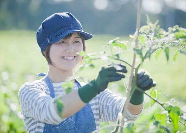 種無しぶどうの作り方【プランターで種から栽培】
