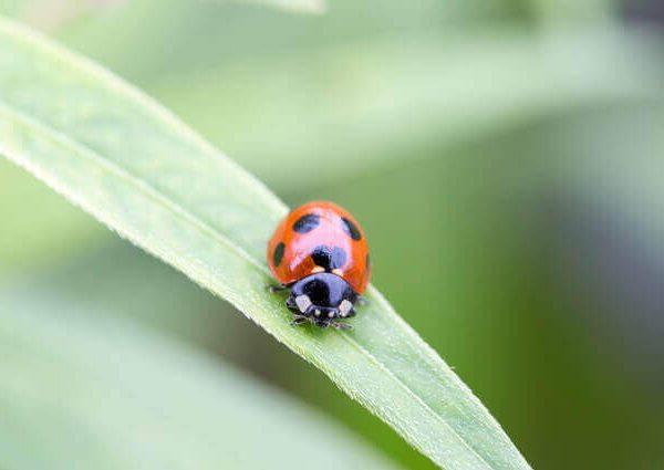 家庭菜園の強い味方!知っておきたい益虫の知識