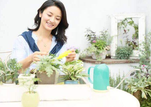 育てやすいアオエニウム属の多肉植物4選