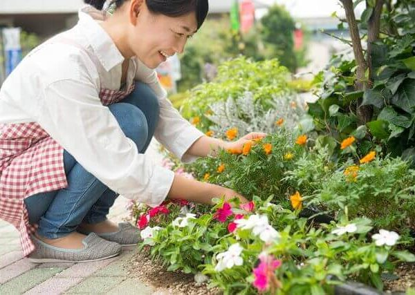 トウモロコシの育て方【プランターで水やり・追肥・支柱立ても!】