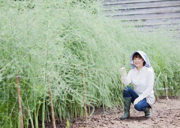 オクラの育て方【おすすめ品種・種まき・植え付け・水やり・追肥・収穫・間引き】