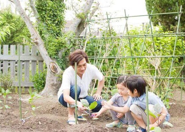 収穫前の実を守ろう!家庭菜園の尻腐病の原因と対策