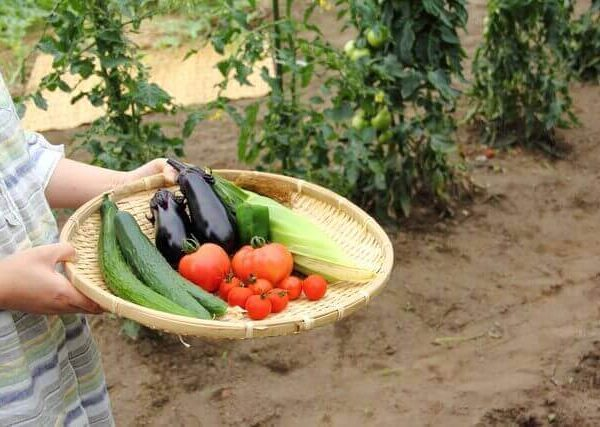 初心者でも育てやすい野菜8選