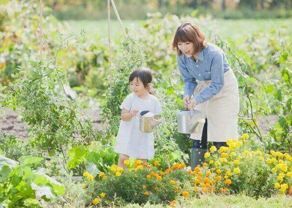 育てやすいエケベリア属の多肉植物4選