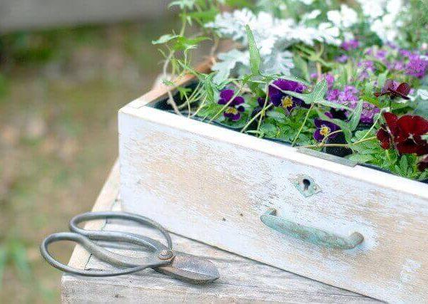秋のガーデニングに人気の育てやすい花や多肉植物8選