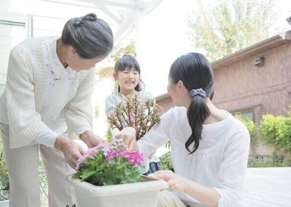 トマトの育て方【水やりやわき芽・間引き方法・病気・害虫の予防と対策】