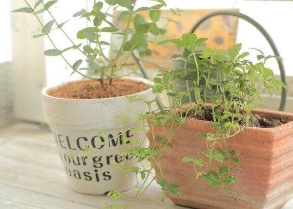 一人暮らしでも育てやすい多肉植物や観葉植物9選