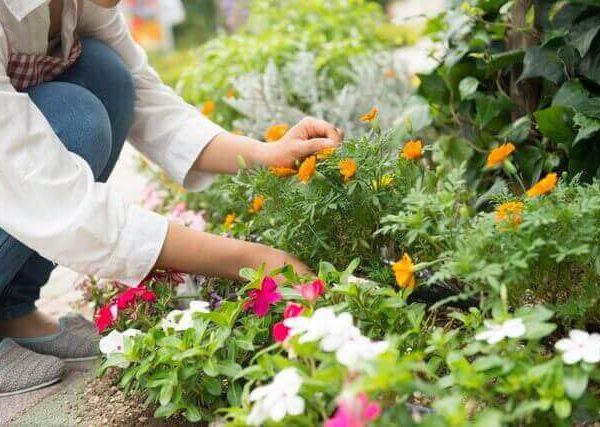 夏のガーデニングにおすすめの育てやすい花5選とゴーヤの育て方