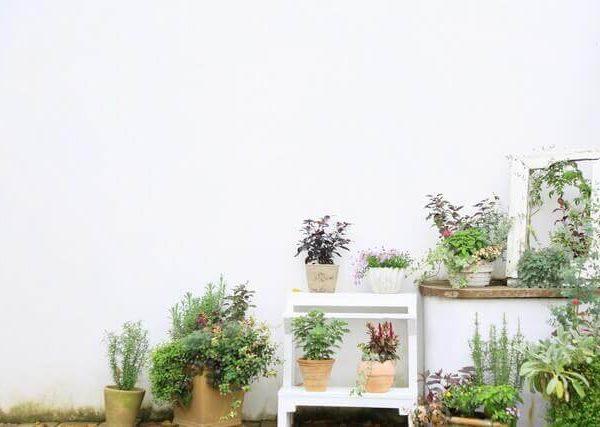 野菜を害虫から守る!虫駆除の対策