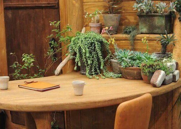 プランターでゴーヤの育て方とウンベラータ栽培方法