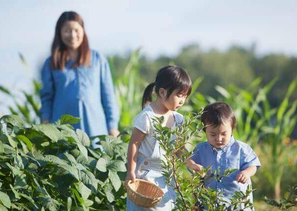 ベランダ菜園で11月に種蒔きする人気の豆類野菜と7月の健康野菜2選