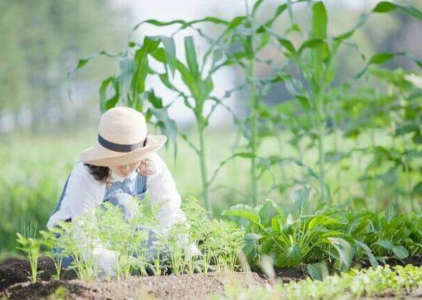 おいしい野菜を収穫するために 家庭菜園における肥料の施し方