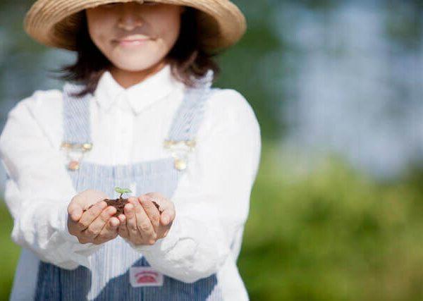 厳しい環境から野菜を守る家庭菜園の天候対策