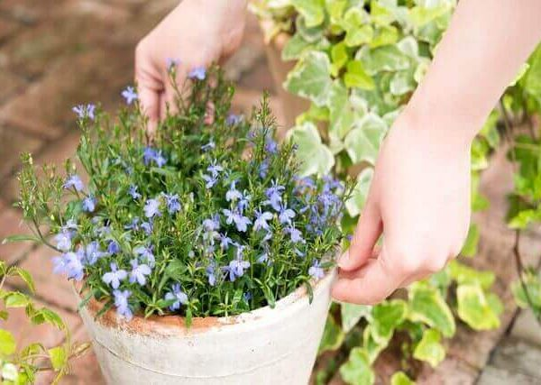 植物を簡単に増やせる挿し木のやり方