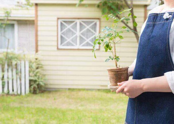 観葉植物に発生する虫の駆除方法