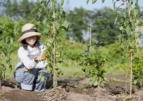 収穫量とおいしさをアップする野菜の株の整え方