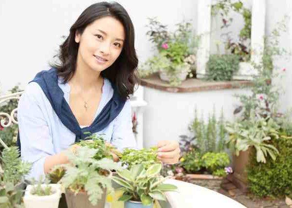 サトイモや唐辛子の育て方や冬のガーデニングにおすすめのオリヅルラン