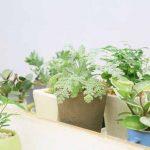 育ちやすい野菜