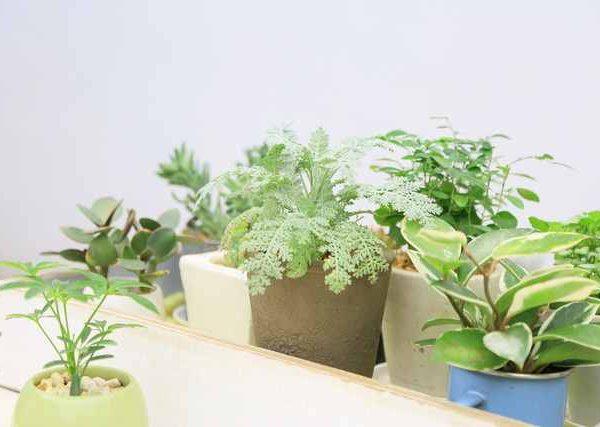 ベランダ菜園の日陰でも育ちやすい人気の野菜5選