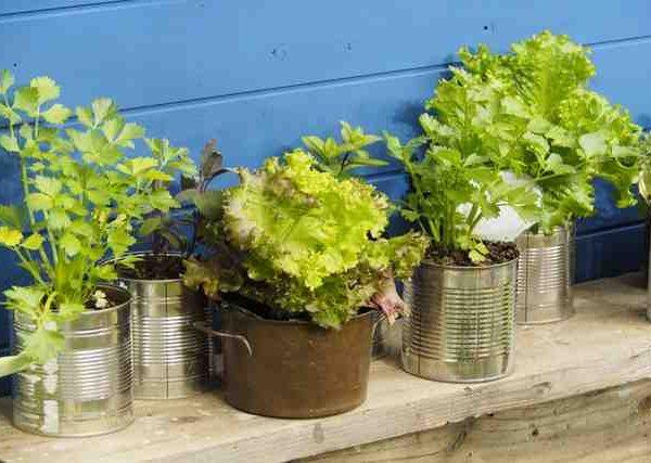 ベランダでサラダの材料やトマトのグリーンカーテンの育て方