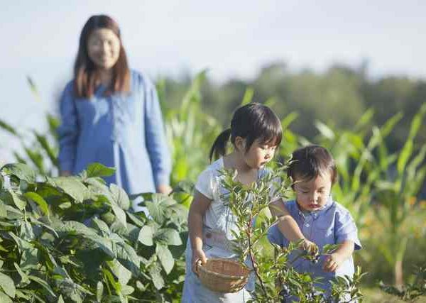親子で家庭菜園ができる育てやすい生姜や野菜の育て方8選
