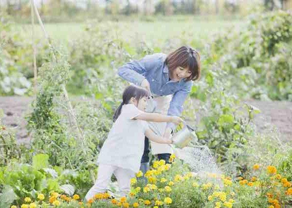 広い庭のお手入れには欠かせない、芝刈り機の選び方