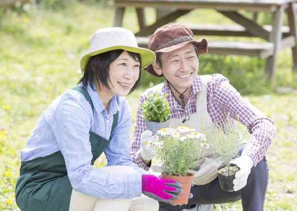 ベランダ菜園でプランター栽培!タラゴンと春菊の育て方